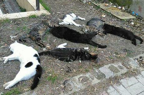 Alanya`da 30 Kedi Katledildi
