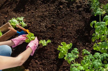 Stresten Arınmak İçin Toprak ve Bahçeyle Uğraşın