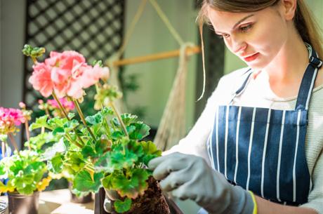Evde Kendi Olanaklarıyla Bitki Yetiştirmek İsteyenlere 5 Öneri