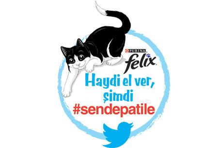 Akıllı Kedi Felixten Sokak Kedilerine Harika Bir Jest Evcil