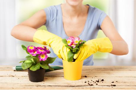 Kışın Çiçek Bakımında Dikkat Edilmesi Gerekenler